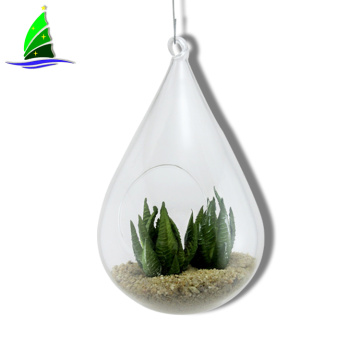 Hanging Glass Vase Air Plant Terrarium