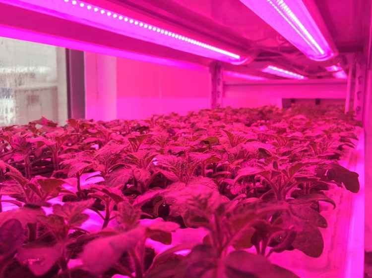 grow light strip