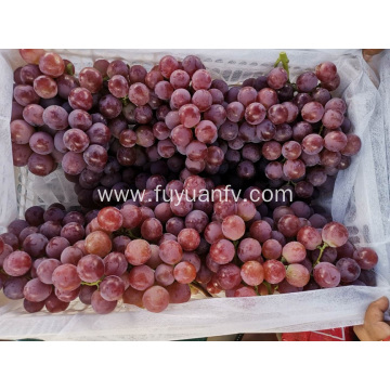 Yunnan Grapes price downing