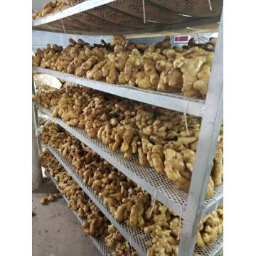 2020CROP FRESH GINGER TO BOOK