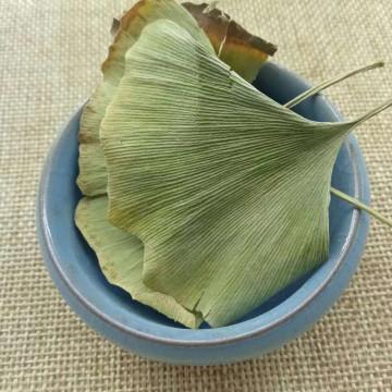 Ginkgo Biloba Leaves Tea Chinese Ginkgo Tea,Green Herbal Green Leaves Tea
