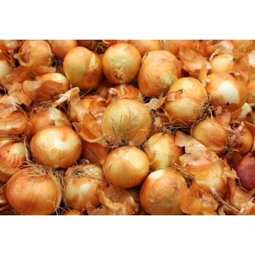 Direct Supplying Red Onions Yellow Onions !!!