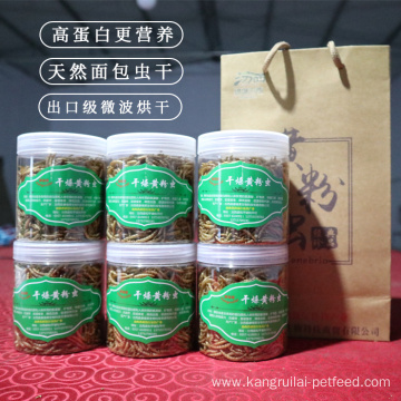 Mealworm Protein In Powder