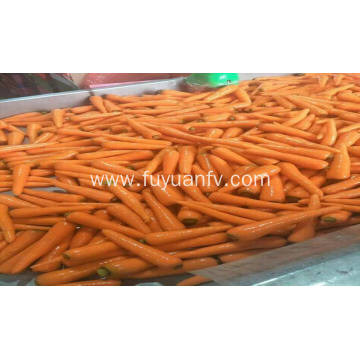 shandong fresh carrot 2018