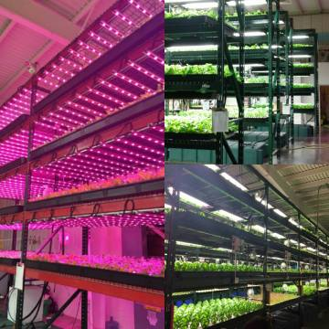 Full Spectrum 300W Cree COB LED Grow Light