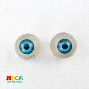 Plastic eyeball anatomy ornament gift pendant key buckle human.organ anatomy medical teaching toy YSK003