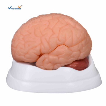 New Style Brain Model 9 Parts