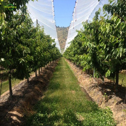 Transparent hdpe woven grape orchard film