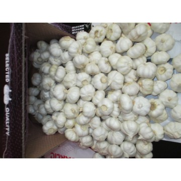 2020 Best Quality Pure Garlic
