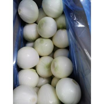 Yellow Peeled Garlic with good quality