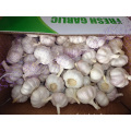The Garlic Fresh New Crop 2019