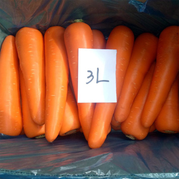 2018 Season Fresh Red Carrots