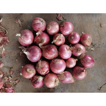 GOOD QUALITY ONION  SUPPLIERS