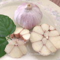 Fresh Red Normal White Garlic all size