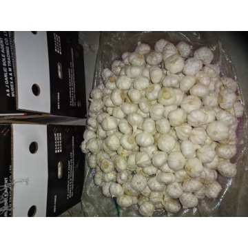 Hot Sale Pure White Garlic 2020