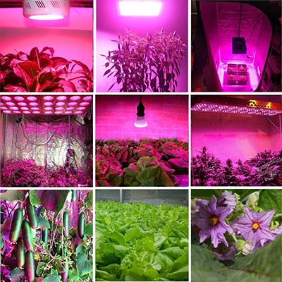 LED Vegetable Light