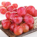 fresh good taste red grape for export
