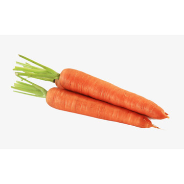 Perfect Long Carrot