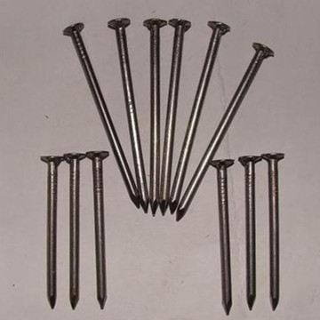 Polished Common Wire Nail