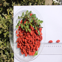 High nutrition Certified Healthy Dried Goji Berry