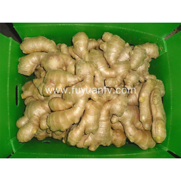 200g Air Dried Ginger