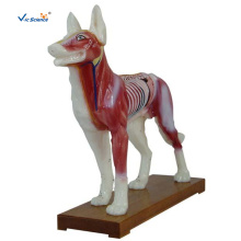 Dog Acupuncture Model For Veterinarian