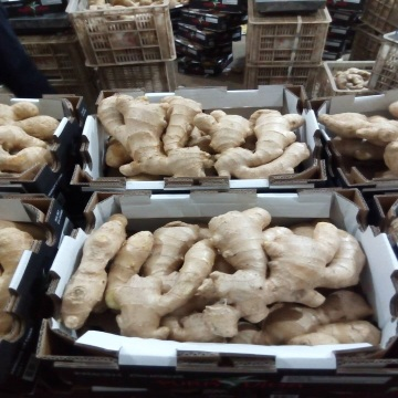 Selected Air Dried Ginger