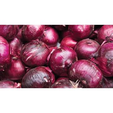 Good Qualiy New Crop  Fresh Onion