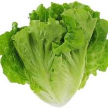 Vegetable Lettuce for sale