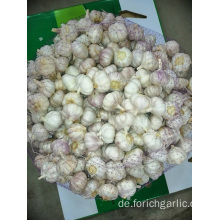 Hot Sale 2019 Normaler Knoblauch