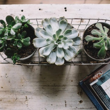 Succulent Plant Pot Holder Tray Container