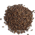 cassia seed chinese herb