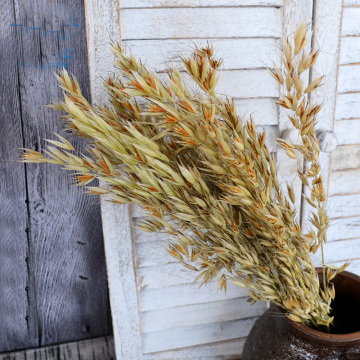 50pcs natural dried natural flower bouquets natural dried ear of oats bouquets oats ear bunches
