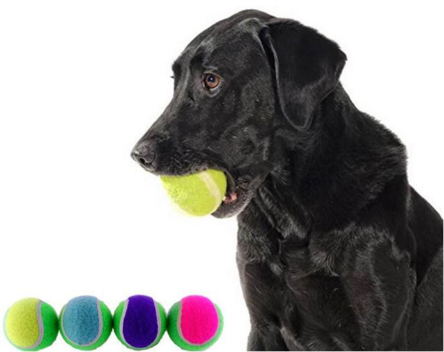 pet dog ball