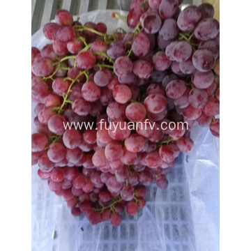 GRAPES QUANTITY IS MORE