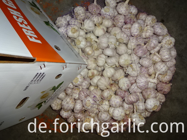 Beautiful New Crop Garlic
