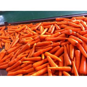 Fresh New Crop Carrots with Carton