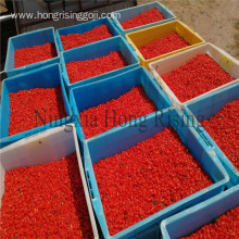 Certified organic dried goji berries bulk wholesale