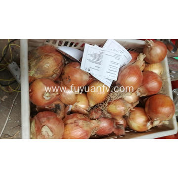 Yellow onions to Indonesia