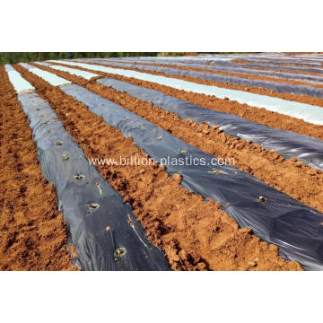 Agricultural Poly Mulch Film in Black