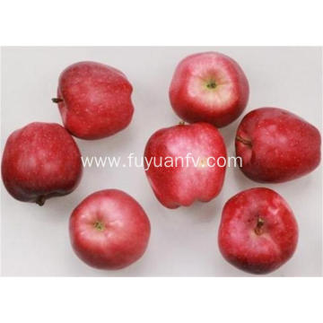 Delicious Fresh Fruit Red Star Apple