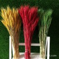 Factory direct sales of natural wheat fields dried flower dried wheat barley plant art film props live flowers 100 pieces/pack