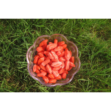 Ningxia Dried Goji Berry