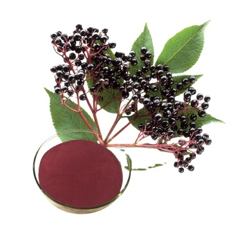 High Quality Black Elderberry Extract Polyphenols 1%