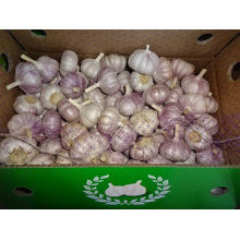 Regular White Garlic Loose Packing