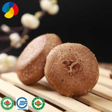 Shiitake Mushroom Without Added Synthetic Ingredients