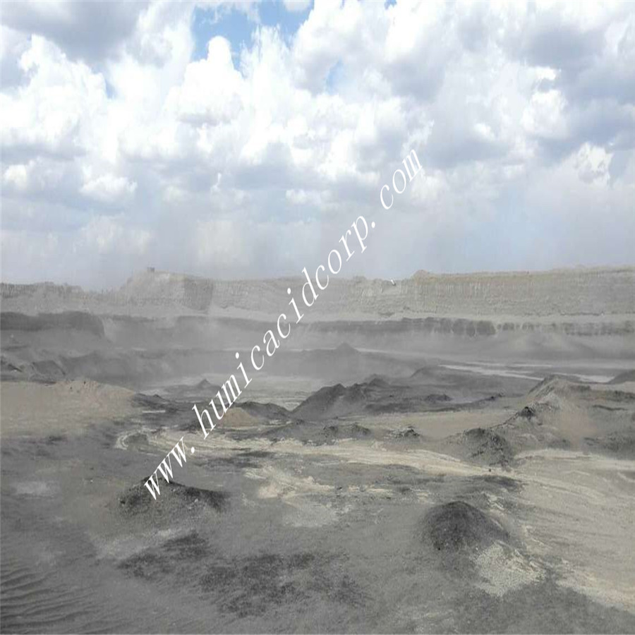 Leonardite mine humic acid 70% from Xinjiang
