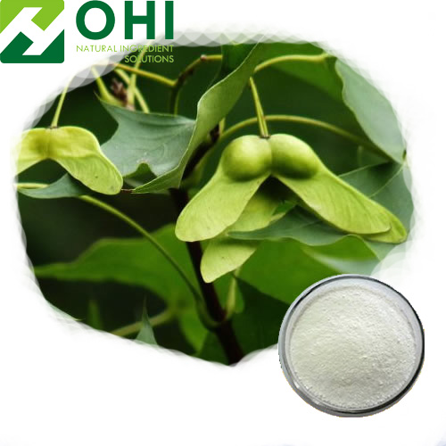 Acer Truncatum Seed Extract Nervonic Acid Powder