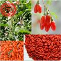 Superfood tradizionale Ningxia Red Goji Berries