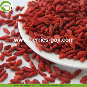 Factory Supply Wholesale Nutrition Dried Wolfberry Organic